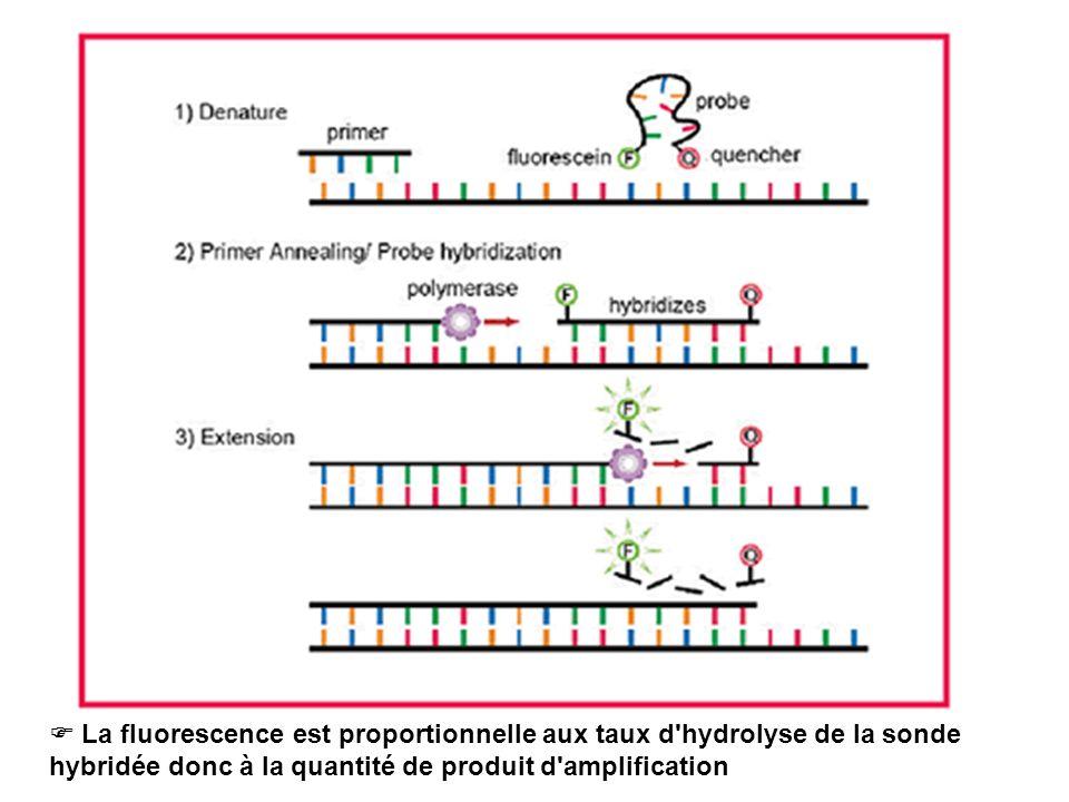  La fluorescence est proportionnelle aux taux d hydrolyse de la sonde hybridée donc à la quantité de produit d amplification
