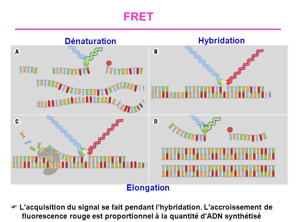 FRET Dénaturation Hybridation Elongation