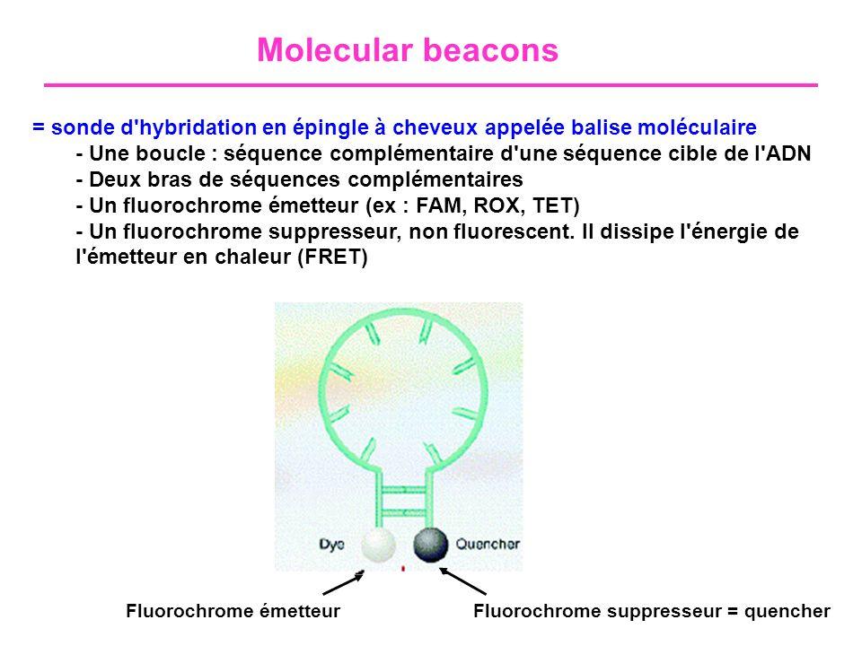 Molecular beacons = sonde d hybridation en épingle à cheveux appelée balise moléculaire.