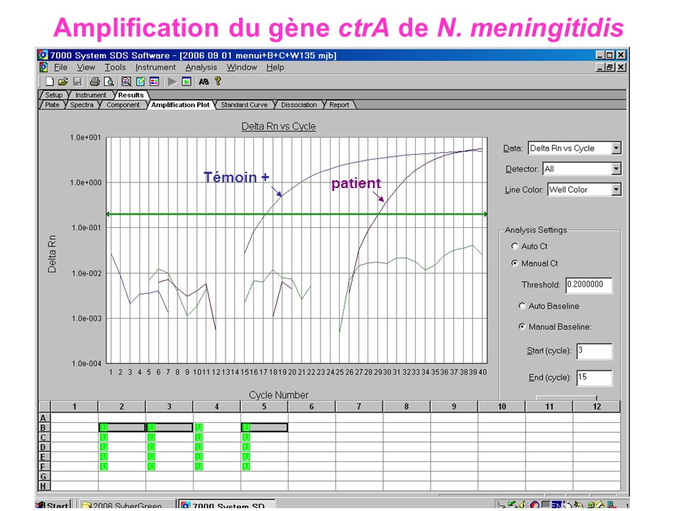 Amplification du gène ctrA de N. meningitidis