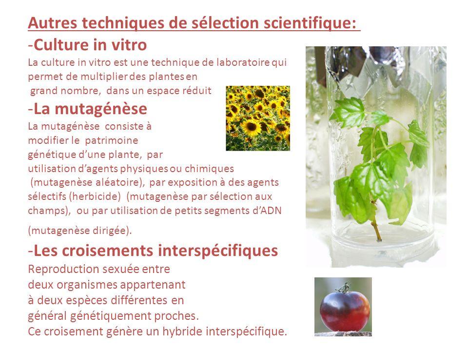 Autres techniques de sélection scientifique: Culture in vitro