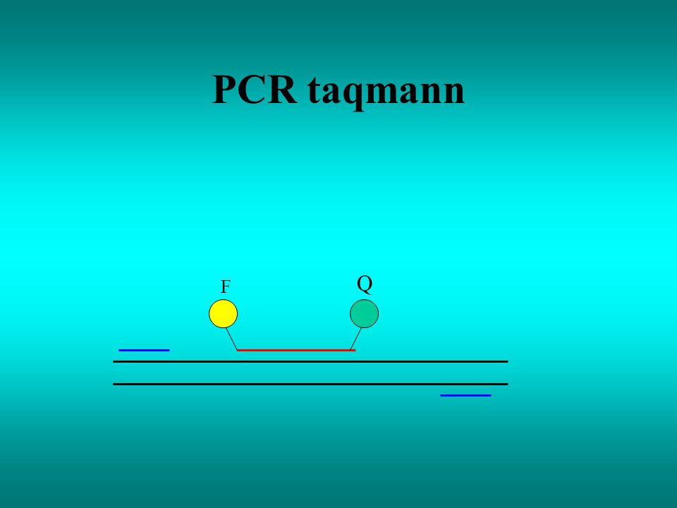 PCR taqmann Q F