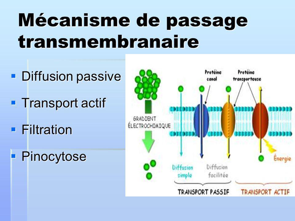 Mécanisme de passage transmembranaire