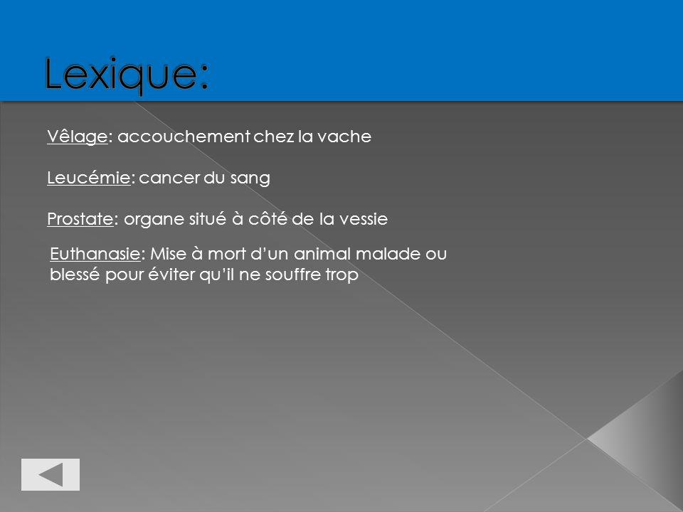 Lexique: Vêlage: accouchement chez la vache Leucémie: cancer du sang