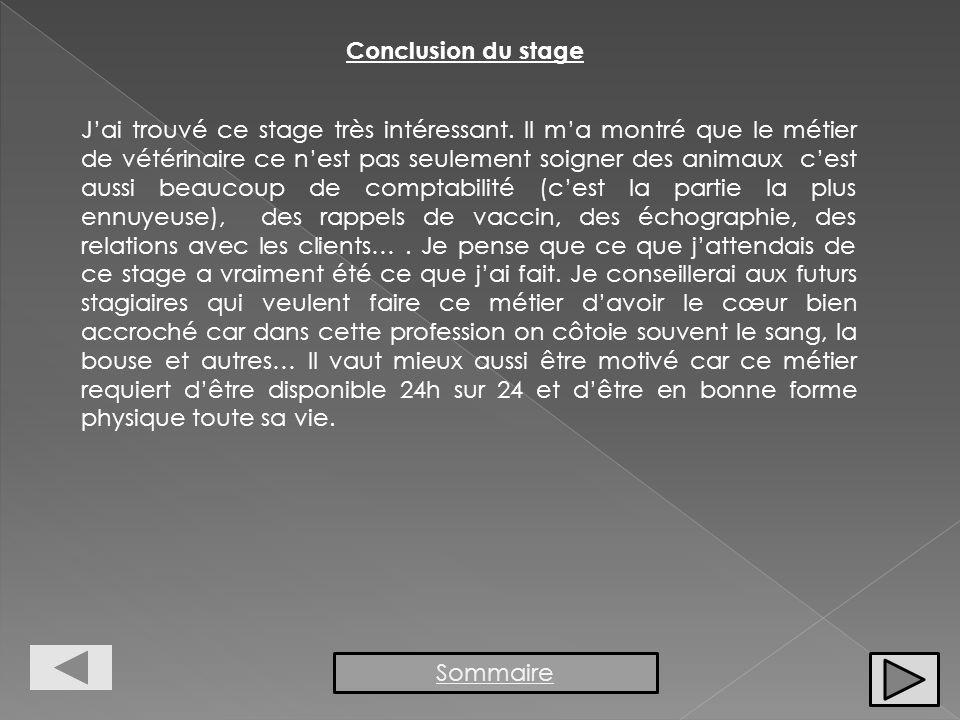 Conclusion du stage