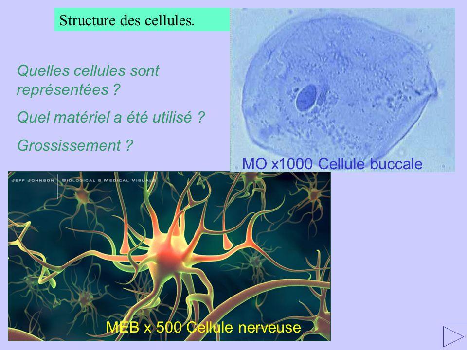 Structure des cellules.