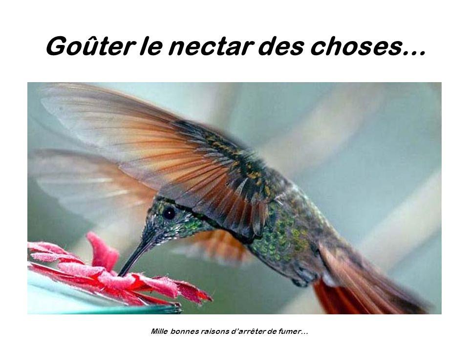 Goûter le nectar des choses…