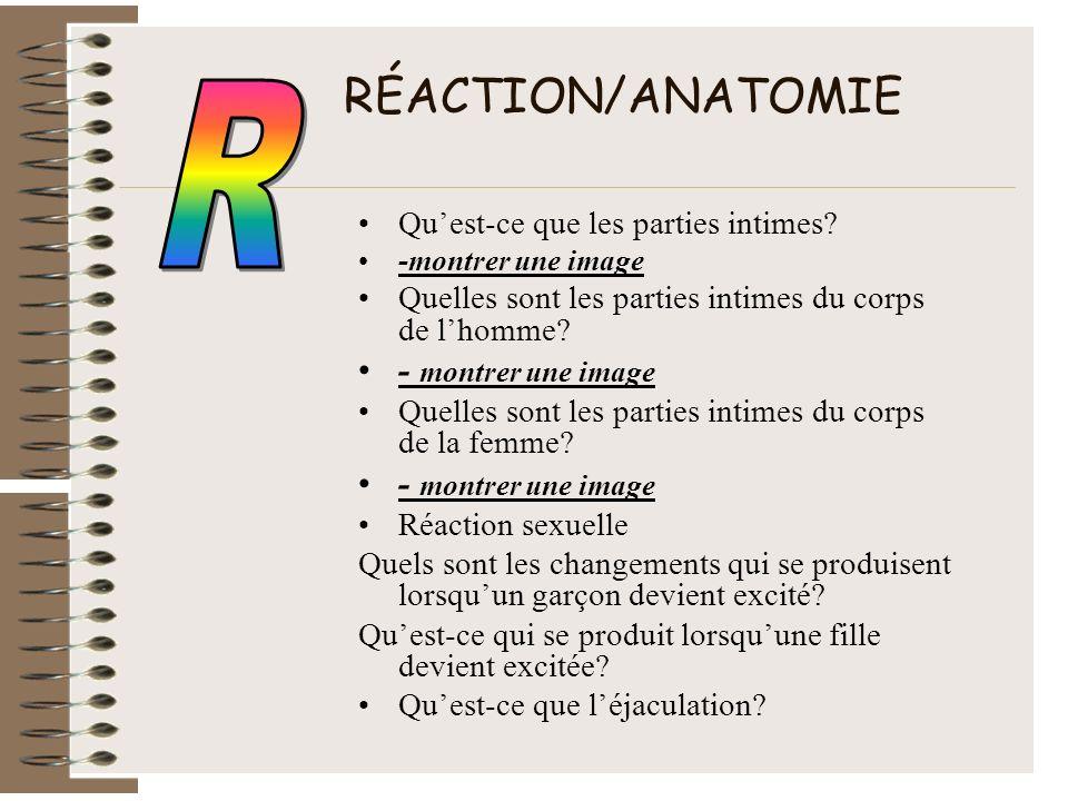 RÉACTION/ANATOMIE R - montrer une image