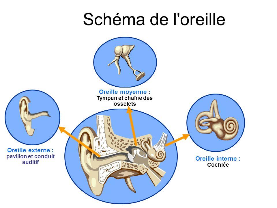Schéma de l oreille Oreille moyenne : Tympan et chaîne des osselets