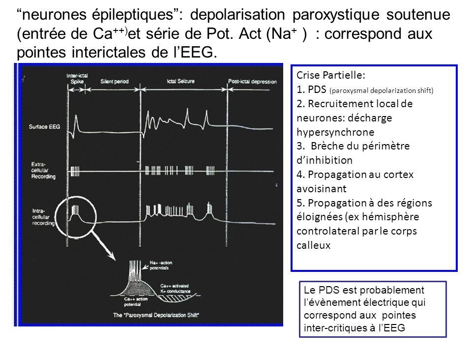 neurones épileptiques : depolarisation paroxystique soutenue (entrée de Ca++)et série de Pot. Act (Na+ ) : correspond aux pointes interictales de l'EEG.