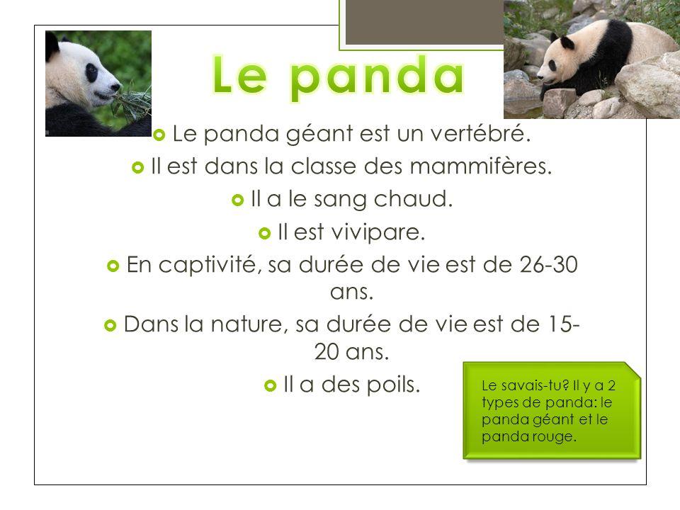 Le panda Le panda géant est un vertébré.