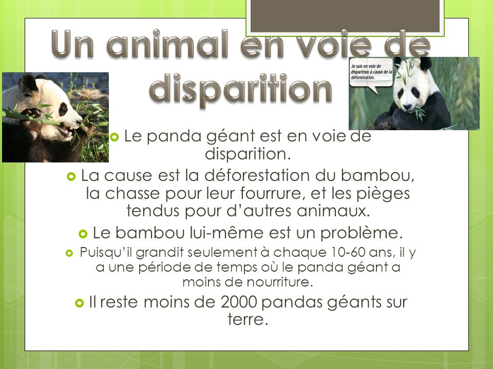 Un animal en voie de disparition