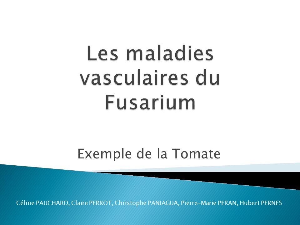 Les maladies vasculaires du Fusarium