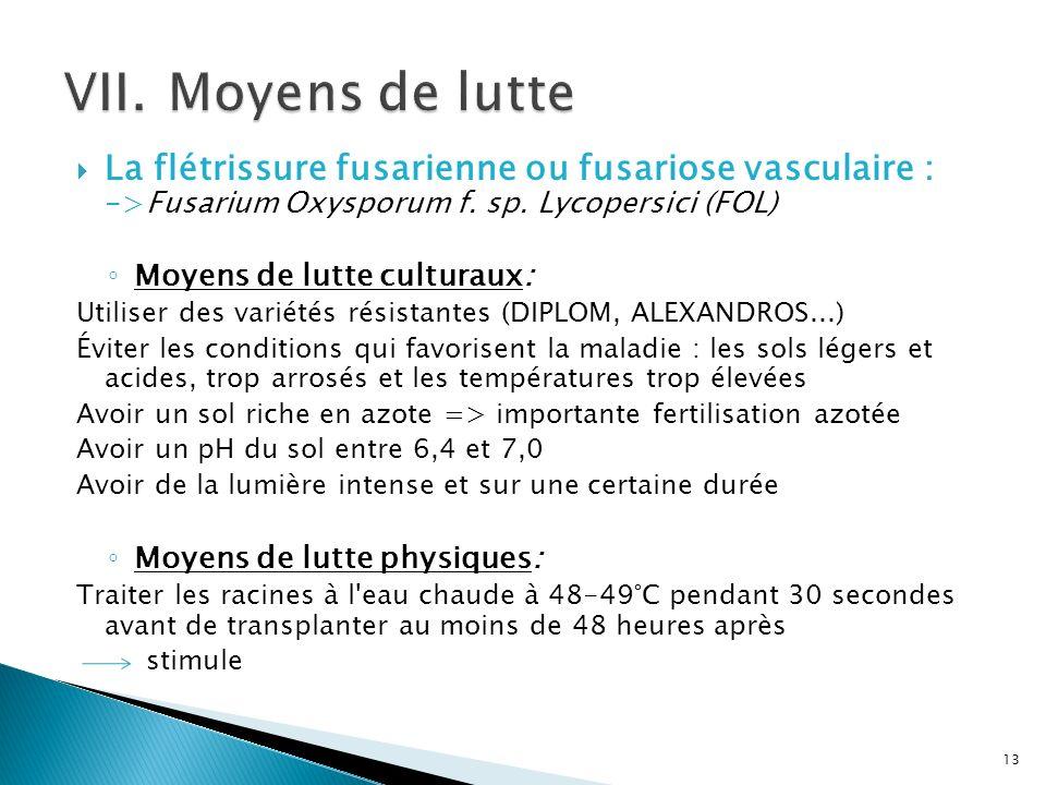 VII. Moyens de lutte La flétrissure fusarienne ou fusariose vasculaire : ->Fusarium Oxysporum f. sp. Lycopersici (FOL)