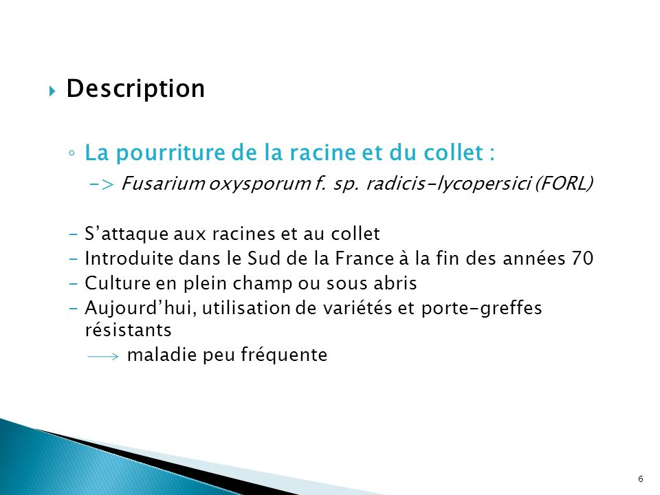 Description La pourriture de la racine et du collet :