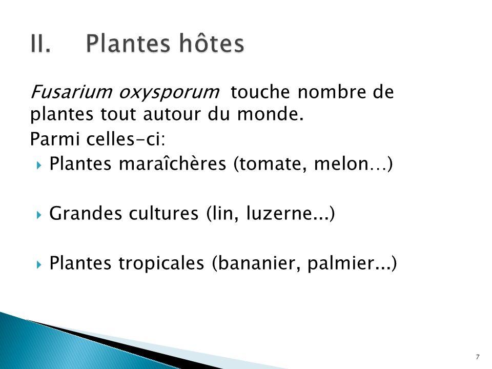 Plantes hôtes Fusarium oxysporum touche nombre de plantes tout autour du monde. Parmi celles-ci: