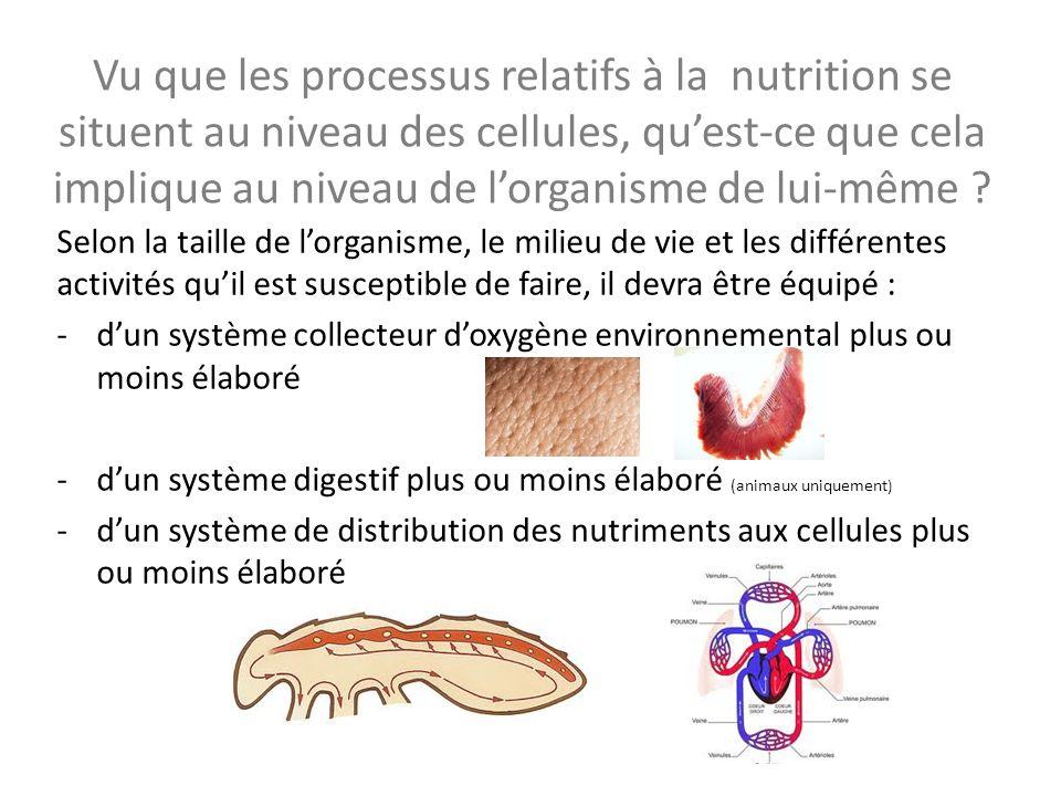 Vu que les processus relatifs à la nutrition se situent au niveau des cellules, qu'est-ce que cela implique au niveau de l'organisme de lui-même