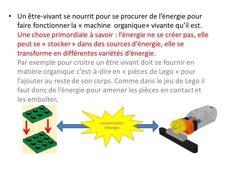 Un être-vivant se nourrit pour se procurer de l'énergie pour faire fonctionner la « machine organique» vivante qu'il est. Une chose primordiale à savoir : l'énergie ne se créer pas, elle peut se « stocker » dans des sources d'énergie, elle se transforme en différentes variétés d'énergie. Par exemple pour croitre un être vivant doit se fournir en matière organique c'est-à-dire en « pièces de Lego » pour l'ajouter au reste de son corps. Comme dans le jeu de Lego il faut donc de l'énergie pour amener les pièces en contact et les emboîter.
