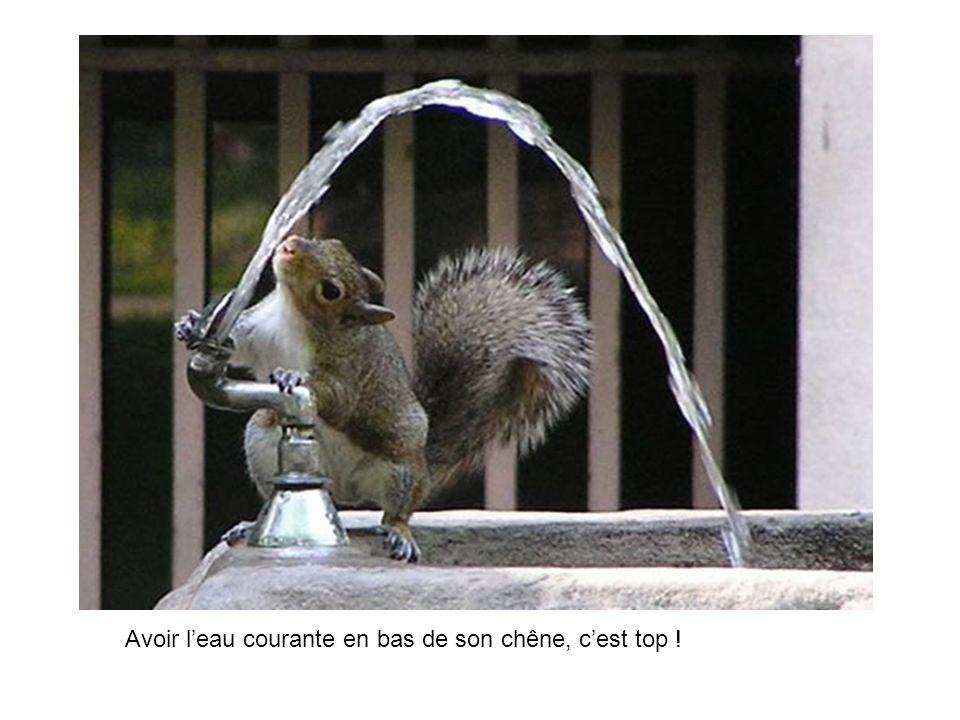 Avoir l'eau courante en bas de son chêne, c'est top !