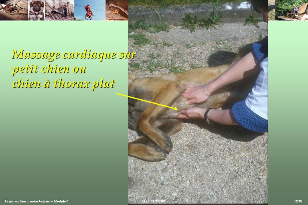Massage cardiaque sur petit chien ou chien à thorax plat