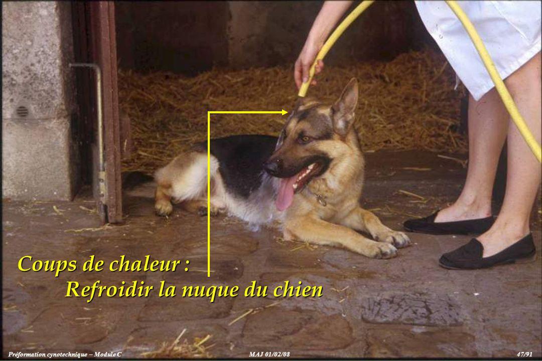 Refroidir la nuque du chien