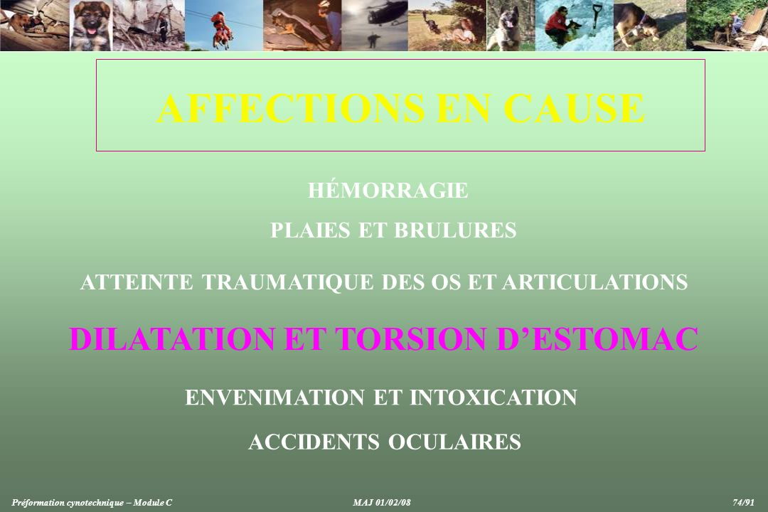 AFFECTIONS EN CAUSE DILATATION ET TORSION D'ESTOMAC HÉMORRAGIE