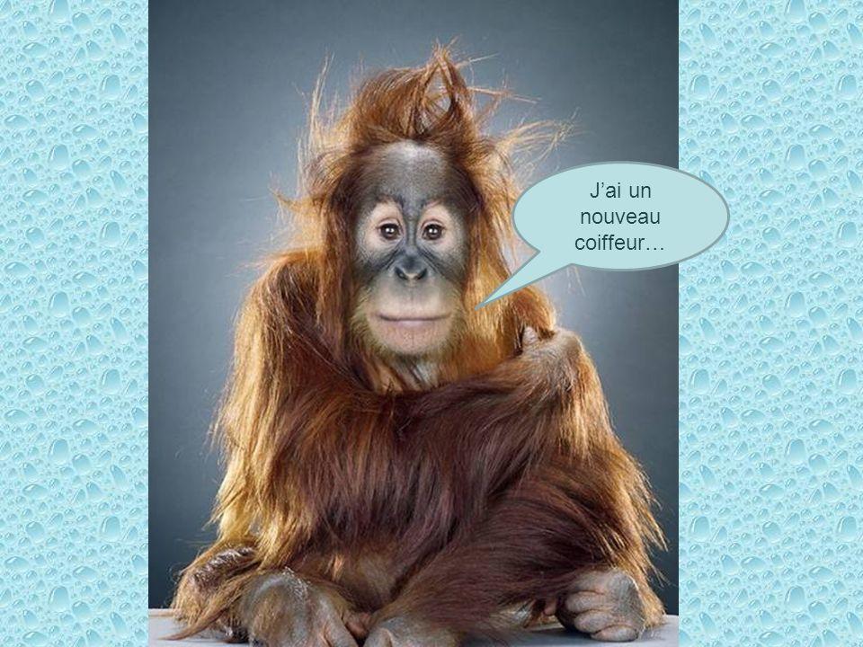 J'ai un nouveau coiffeur…