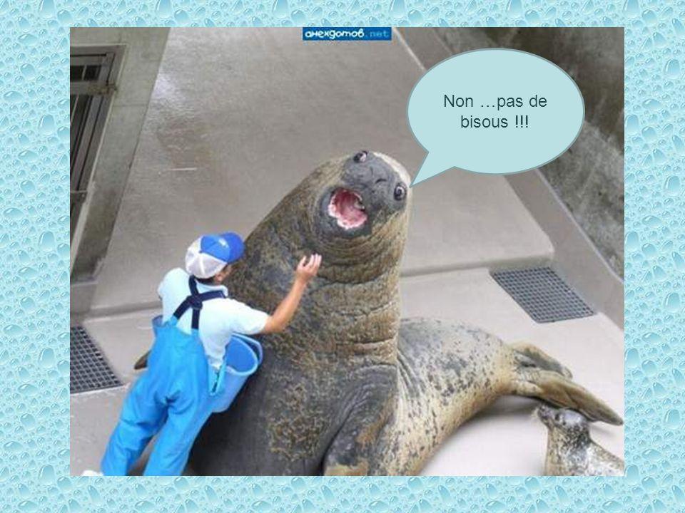 Non …pas de bisous !!!