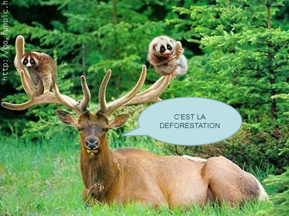 C'EST LA DEFORESTATION