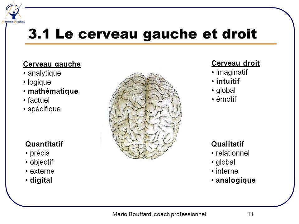 3.1 Le cerveau gauche et droit
