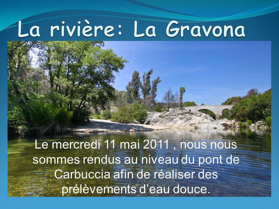 La rivière: La Gravona