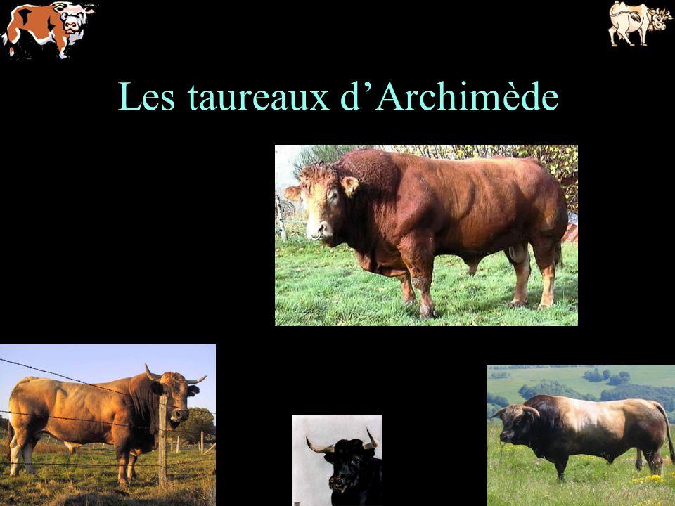 Les taureaux d'Archimède