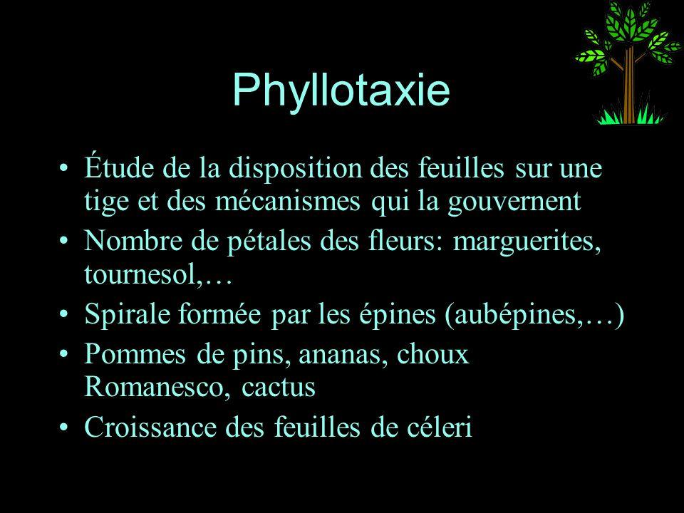 Phyllotaxie Étude de la disposition des feuilles sur une tige et des mécanismes qui la gouvernent.