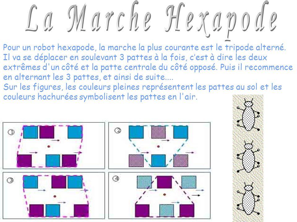 La Marche Hexapode