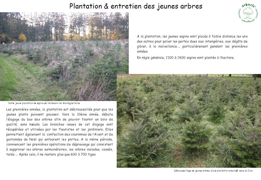 Plantation & entretien des jeunes arbres