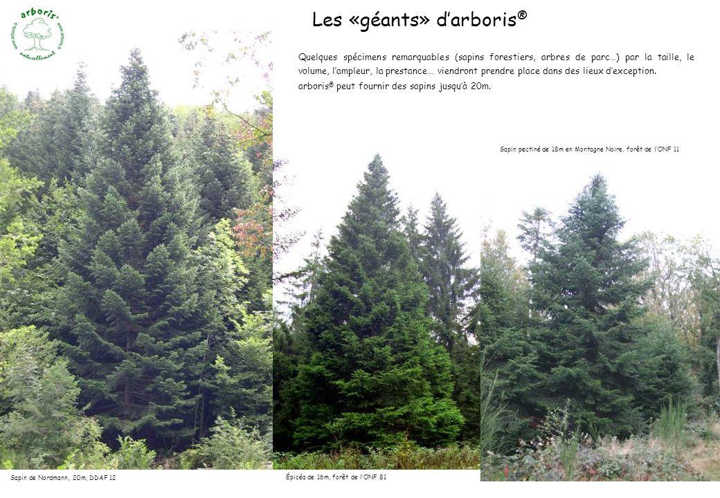 Les «géants» d'arboris®