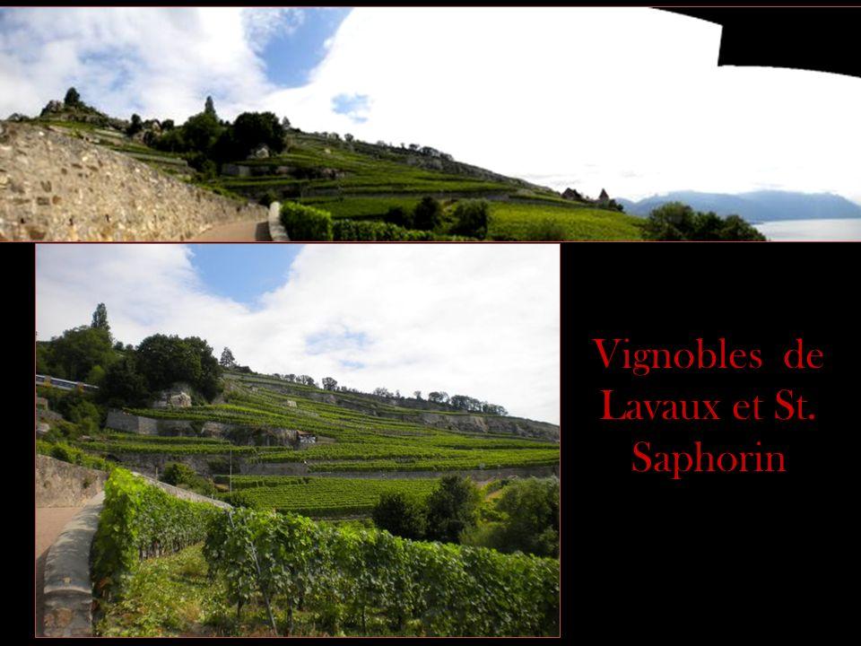 Vignobles de Lavaux et St. Saphorin