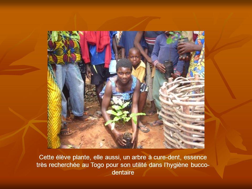 Cette élève plante, elle aussi, un arbre à cure-dent, essence très recherchée au Togo pour son utilité dans l'hygiène bucco-dentaire