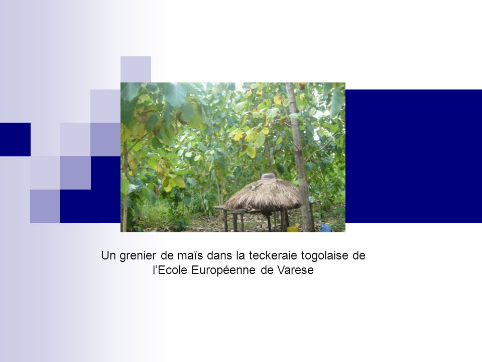 Un grenier de maïs dans la teckeraie togolaise de l'Ecole Européenne de Varese