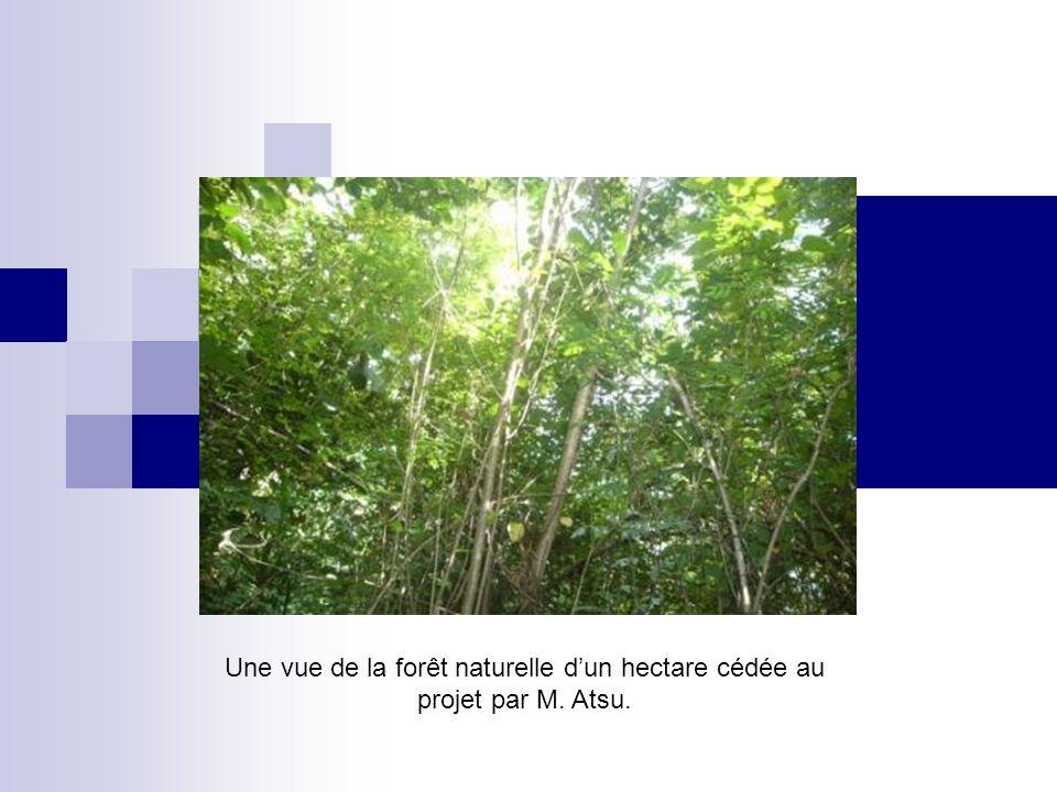Une vue de la forêt naturelle d'un hectare cédée au projet par M. Atsu.