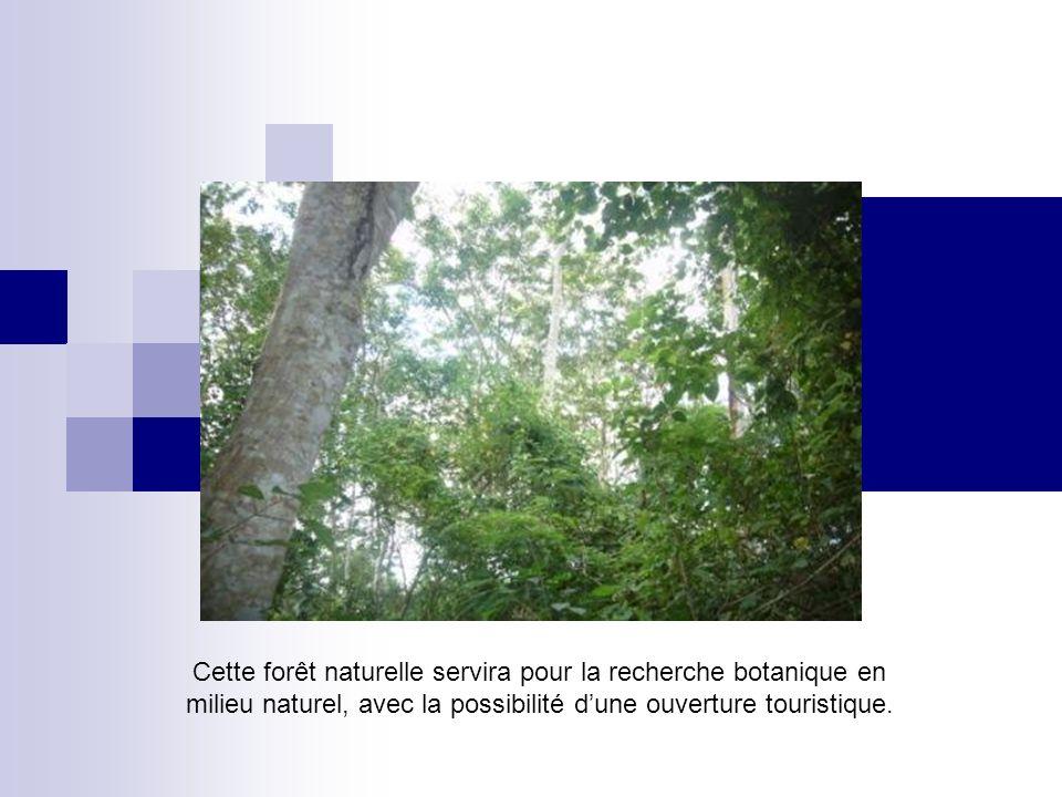 Cette forêt naturelle servira pour la recherche botanique en milieu naturel, avec la possibilité d'une ouverture touristique.