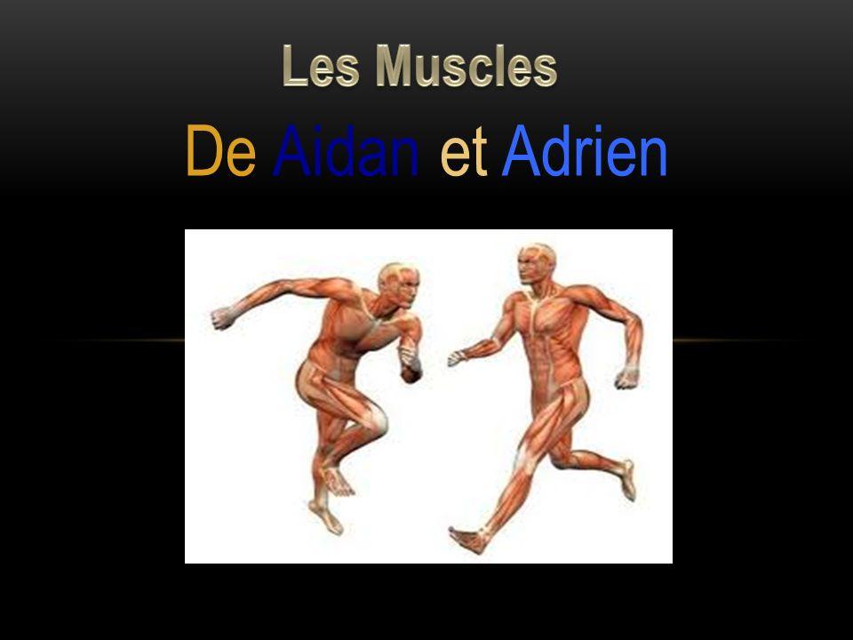 Les Muscles De Aidan et Adrien
