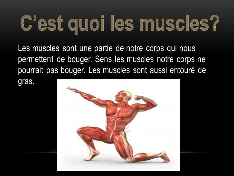 C'est quoi les muscles