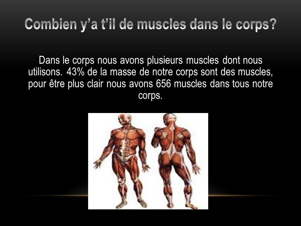 Combien y'a t'il de muscles dans le corps
