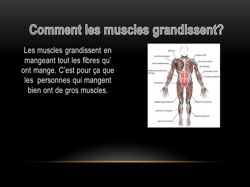 Comment les muscles grandissent
