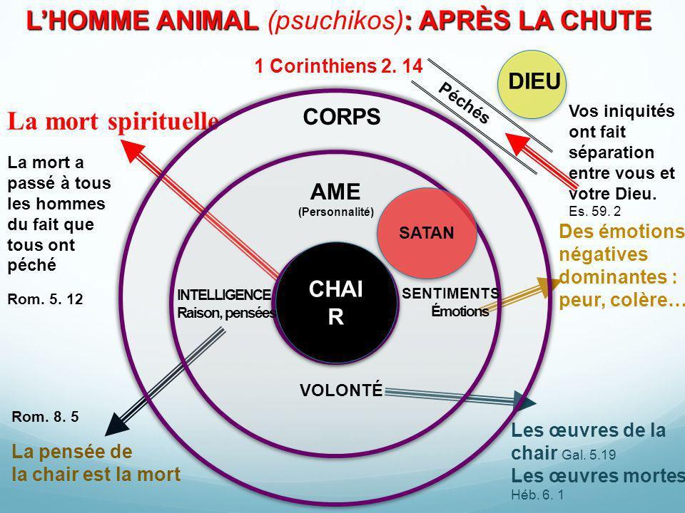L'HOMME ANIMAL (psuchikos): APRÈS LA CHUTE