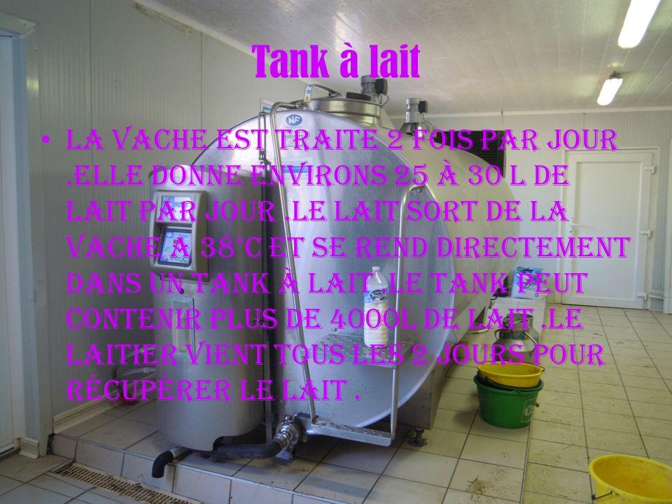 Tank à lait