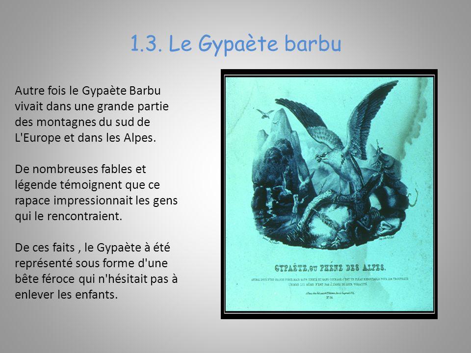 1.3. Le Gypaète barbu Autre fois le Gypaète Barbu vivait dans une grande partie des montagnes du sud de L Europe et dans les Alpes.