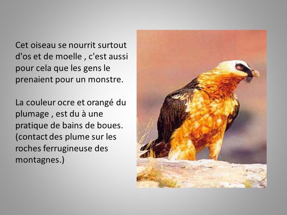 Cet oiseau se nourrit surtout d os et de moelle , c est aussi pour cela que les gens le prenaient pour un monstre.