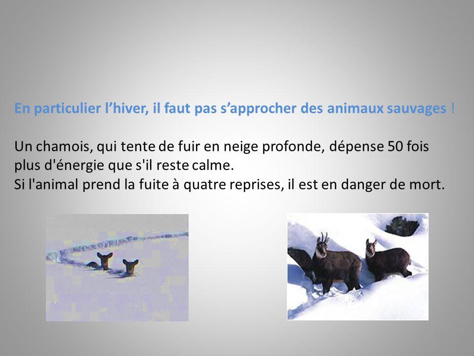 En particulier l'hiver, il faut pas s'approcher des animaux sauvages !